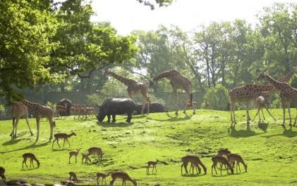 dierenpark-emmen-incl-friet-en-snack