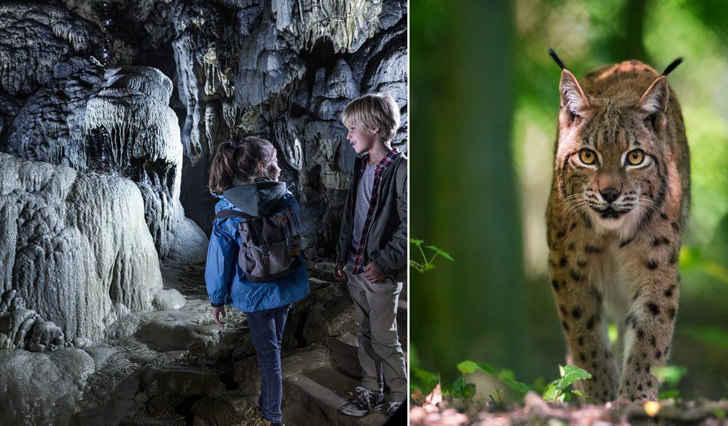 Grotten van Han + Wildpark