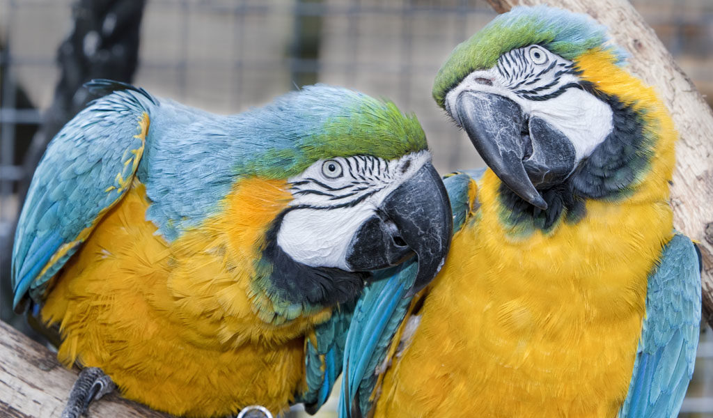Bijzonder dierenpark in Brabant Goes